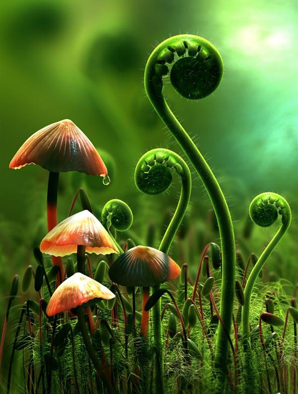 laksa plant. poison ivy plant red. poison
