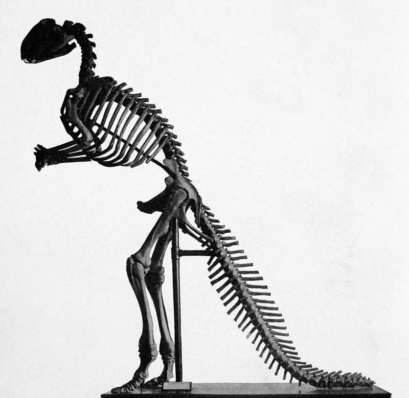800px-Hadrosaurus_mount.jpg